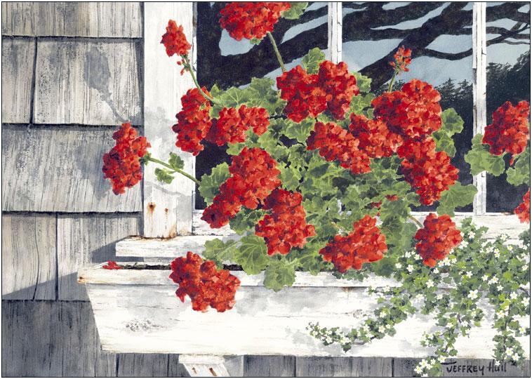 Carol's Geraniums