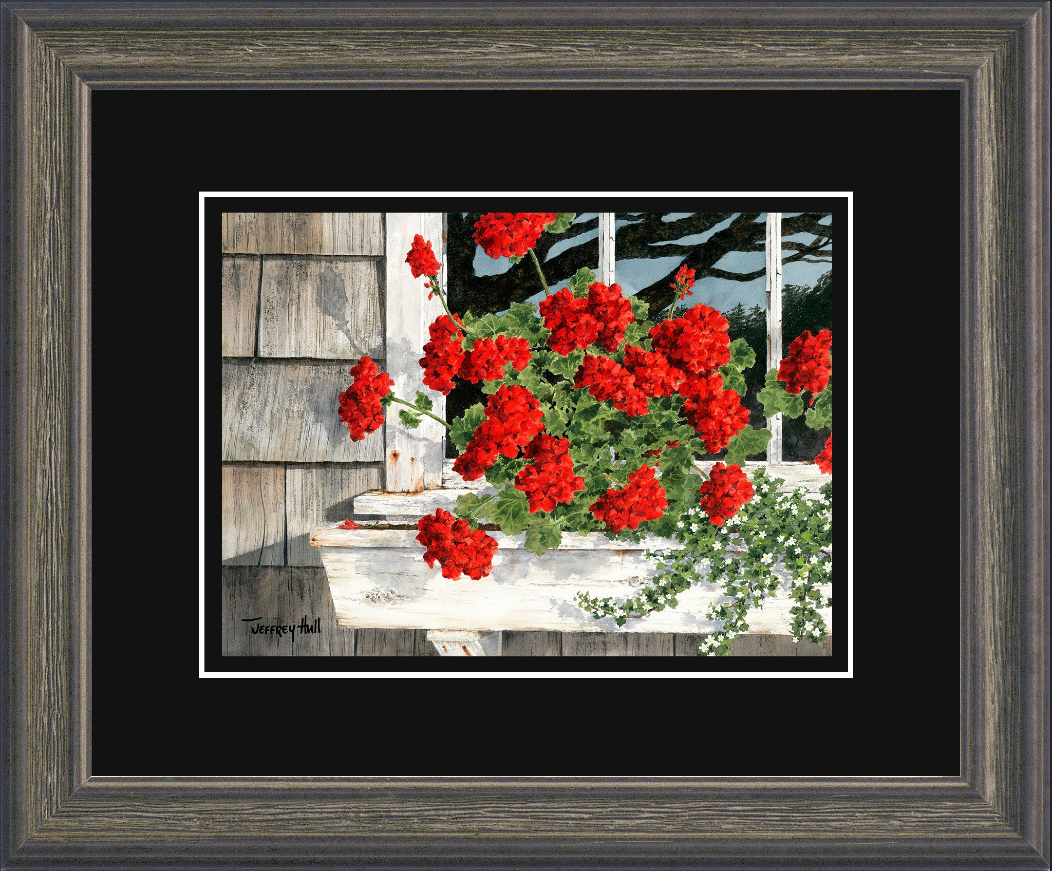 Carol_s-Geraniums-Mini-Cascade-Jet-Black-4-Website-2021