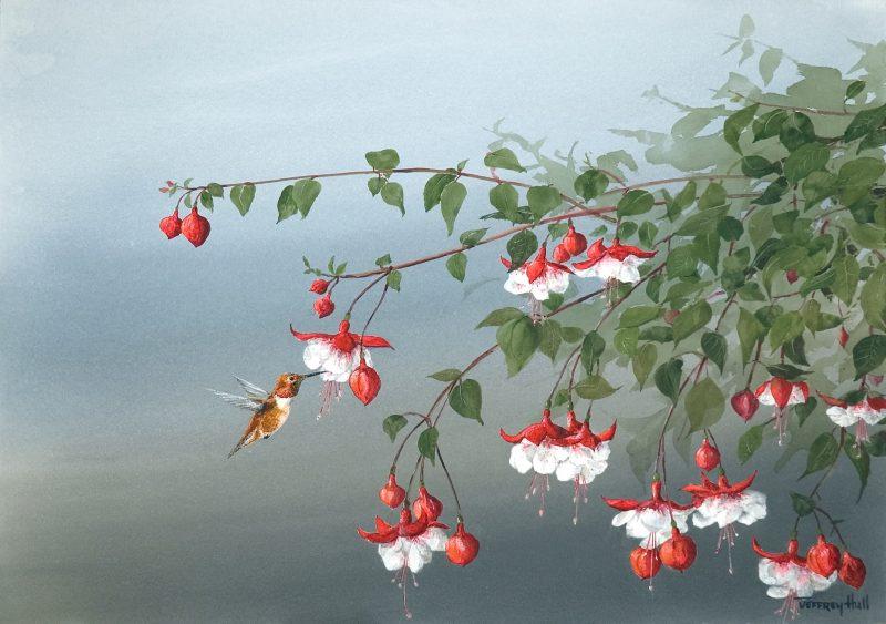 Fuchsia Blossoms